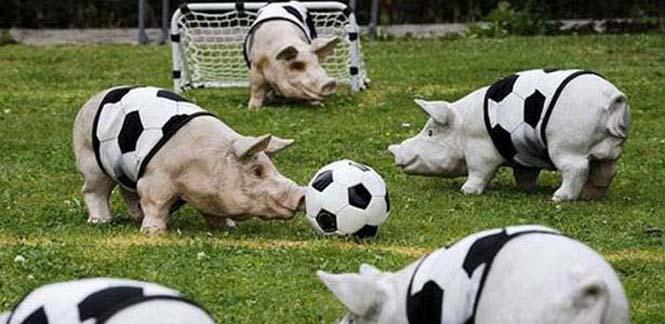 Όταν τα ζώα παίζουν ποδόσφαιρο (16)