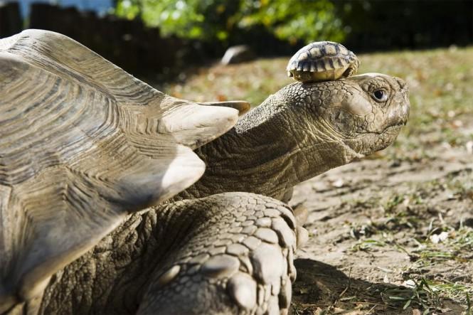 Χελώνα 140 ετών ποζάρει με τον 5 ημερών γιο της | Φωτογραφία της ημέρας