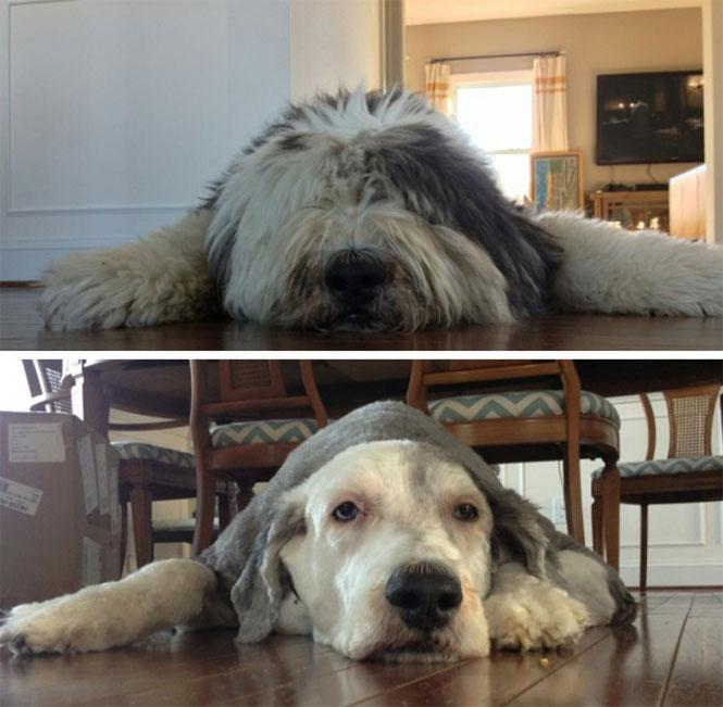 Ο ίδιος σκύλος, διαφορετικό κούρεμα | Φωτογραφία της ημέρας