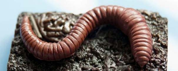 Οι πιο αηδιαστικές δημιουργίες με σοκολάτα (15)