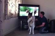 Σκύλος προσπαθεί να πηδήξει στην τηλεόραση για να σώσει αγόρι από αρκούδα