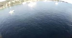 Το χειρότερο που μπορεί να συναντήσεις μετά από μια βουτιά από βράχο… (Video)