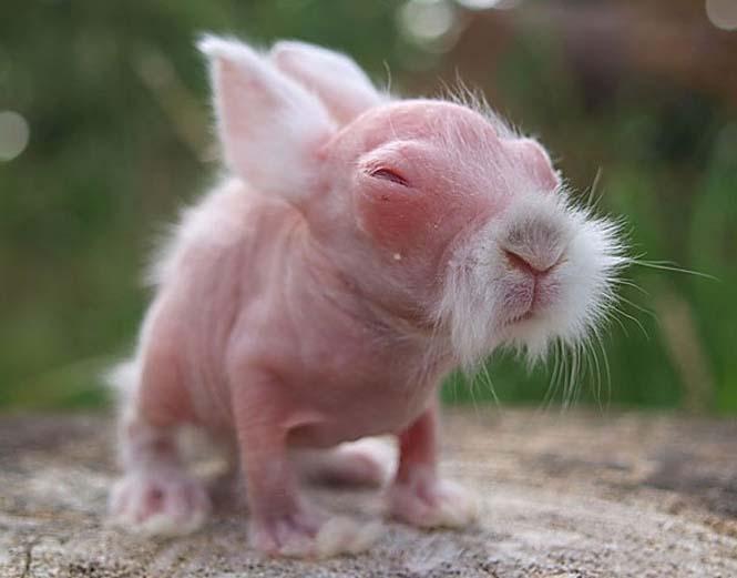 Ζώα που μοιάζουν αγνώριστα χωρίς το τρίχωμα τους (1)