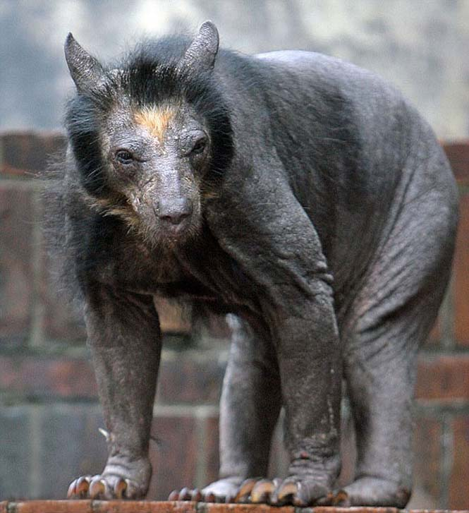 Ζώα που μοιάζουν αγνώριστα χωρίς το τρίχωμα τους (3)