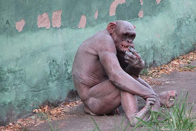 Ζώα που μοιάζουν αγνώριστα χωρίς το τρίχωμα τους (20)