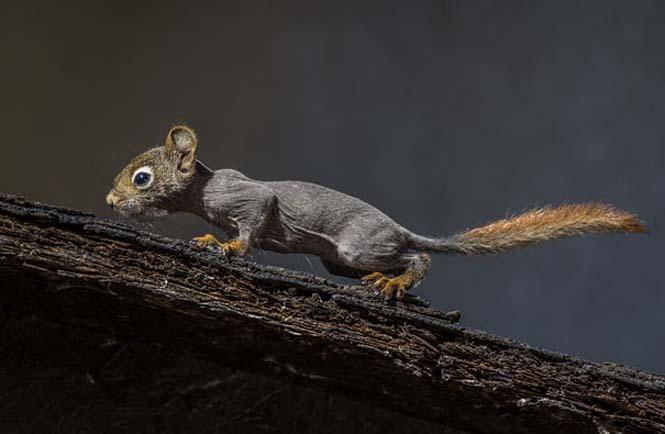Ζώα που μοιάζουν αγνώριστα χωρίς το τρίχωμα τους (11)