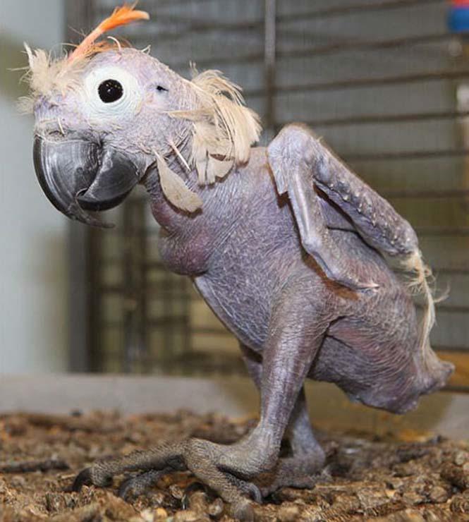 Ζώα που μοιάζουν αγνώριστα χωρίς το τρίχωμα τους (7)