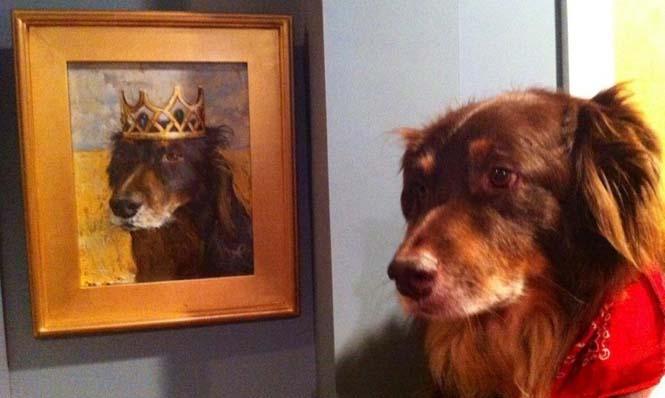 Ζώα ποζάρουν με το πορτραίτο τους (7)
