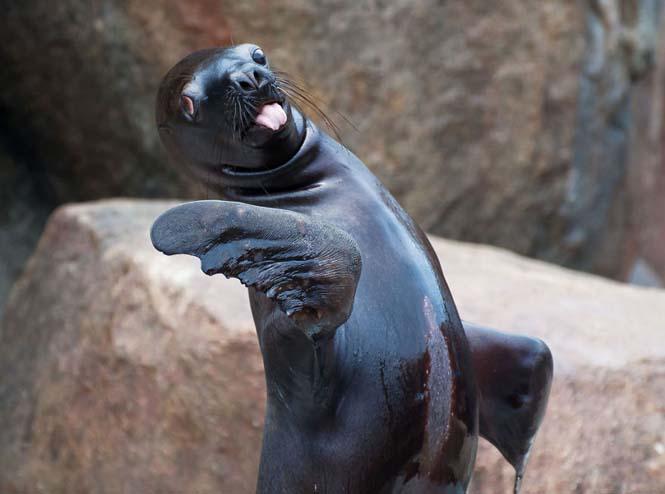 Ζώα βγάζουν γλώσσα (2)
