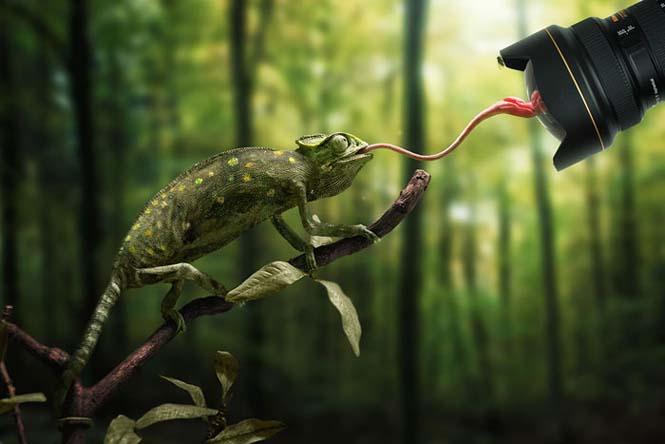 Ζώα βγάζουν γλώσσα (17)