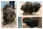 Η απόλυτη μεταμόρφωση ενός σκύλου (1)