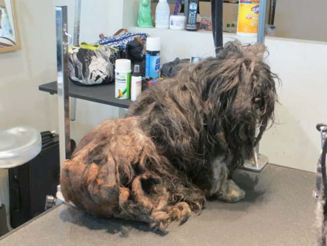 Η απόλυτη μεταμόρφωση ενός σκύλου (3)