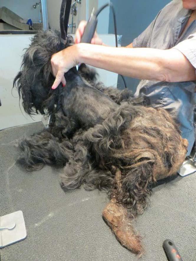 Η απόλυτη μεταμόρφωση ενός σκύλου (4)