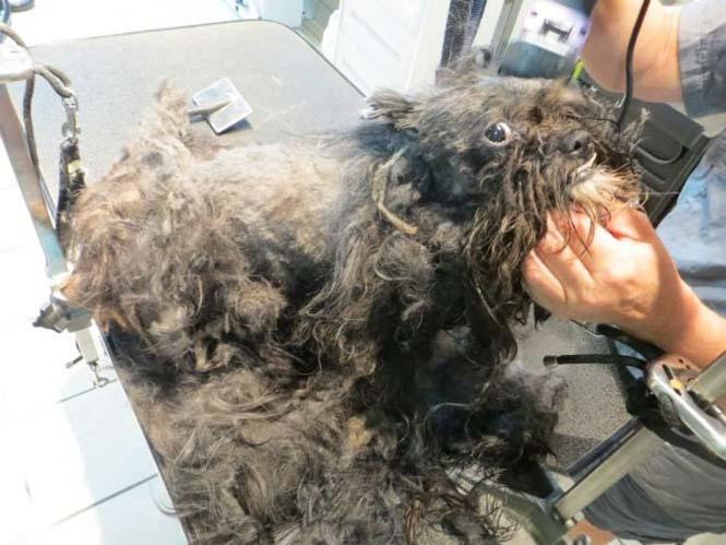 Η απόλυτη μεταμόρφωση ενός σκύλου (5)