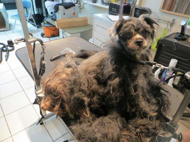 Η απόλυτη μεταμόρφωση ενός σκύλου (6)