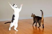 Διασκέδαση για γάτες με έναν ανεμιστήρα οροφής