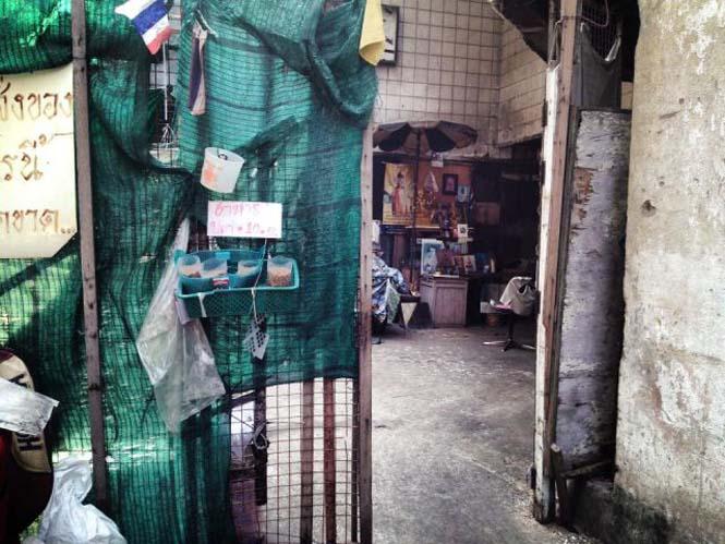 Εγκαταλελειμμένο εμπορικό κέντρο στην Μπανγκόκ απέκτησε περίεργους νέους κατοίκους (5)