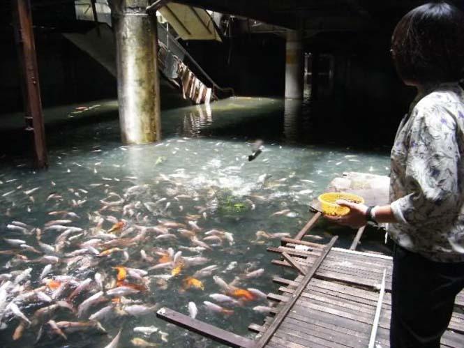 Εγκαταλελειμμένο εμπορικό κέντρο στην Μπανγκόκ απέκτησε περίεργους νέους κατοίκους (8)