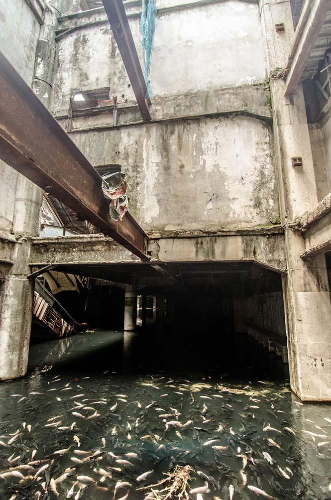 Εγκαταλελειμμένο εμπορικό κέντρο στην Μπανγκόκ απέκτησε περίεργους νέους κατοίκους (17)
