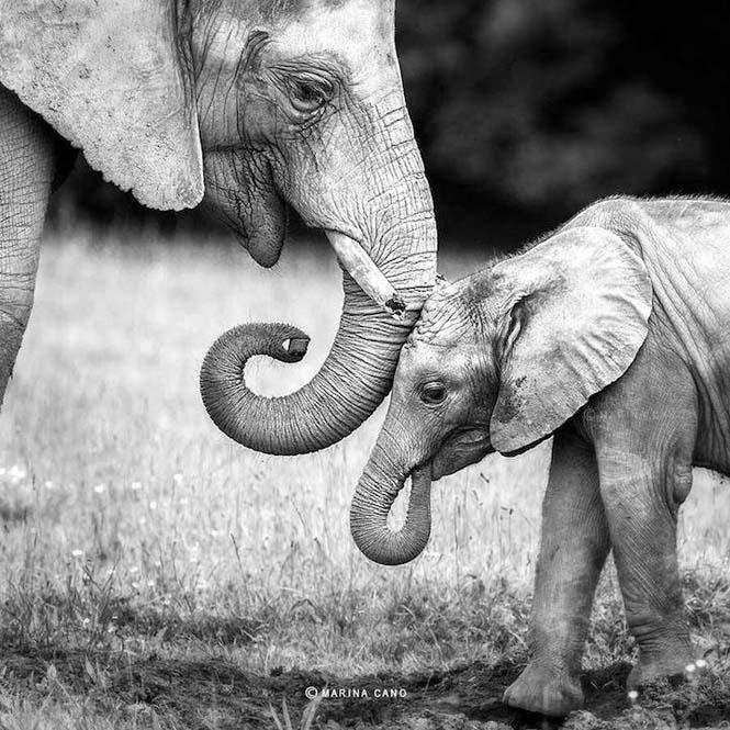 Εκπληκτικές φωτογραφίες της άγριας ζωής από την φωτογράφο Marina Cano (2)