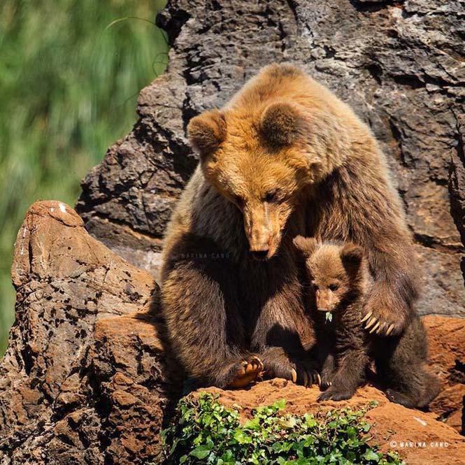 Εκπληκτικές φωτογραφίες της άγριας ζωής από την φωτογράφο Marina Cano (3)