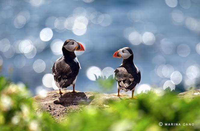 Εκπληκτικές φωτογραφίες της άγριας ζωής από την φωτογράφο Marina Cano (4)