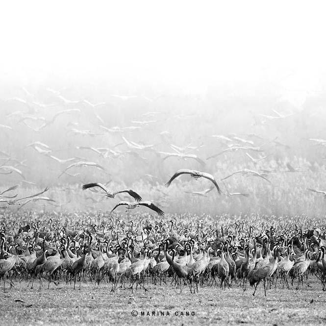 Εκπληκτικές φωτογραφίες της άγριας ζωής από την φωτογράφο Marina Cano (5)