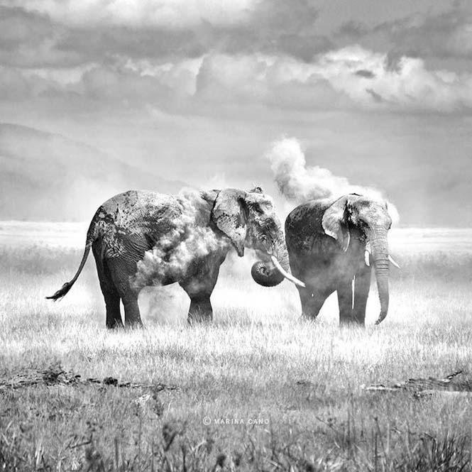 Εκπληκτικές φωτογραφίες της άγριας ζωής από την φωτογράφο Marina Cano (6)