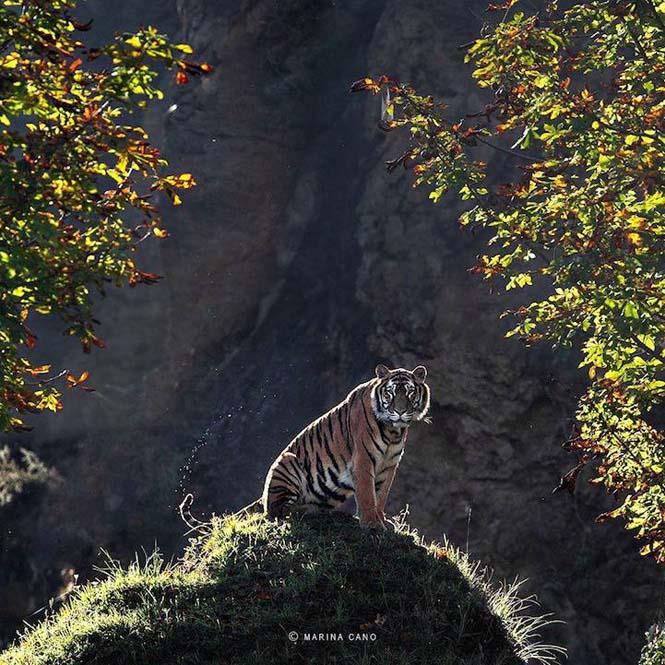 Εκπληκτικές φωτογραφίες της άγριας ζωής από την φωτογράφο Marina Cano (9)