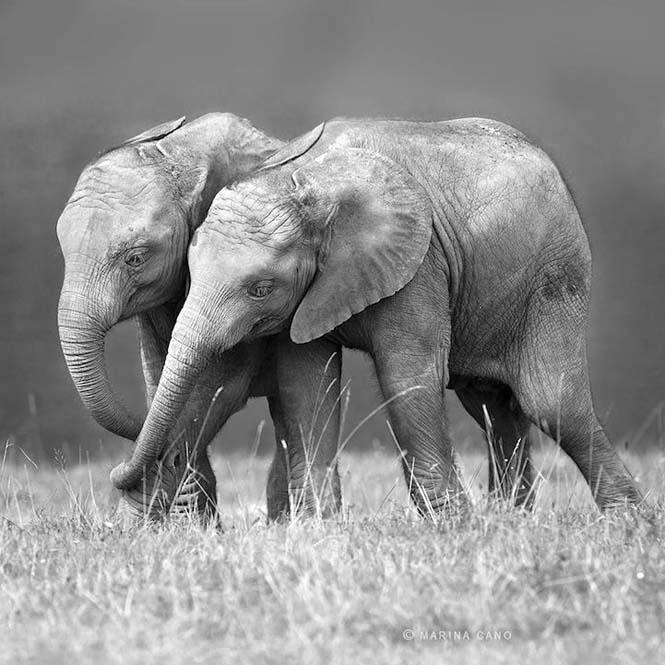 Εκπληκτικές φωτογραφίες της άγριας ζωής από την φωτογράφο Marina Cano (10)