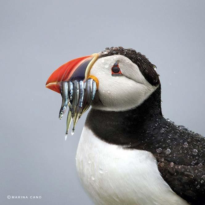 Εκπληκτικές φωτογραφίες της άγριας ζωής από την φωτογράφο Marina Cano (14)