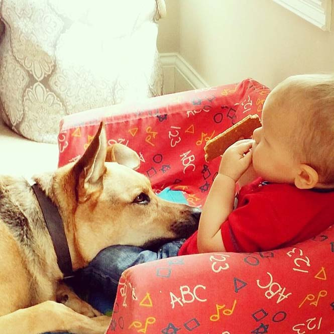 Ένα μωρό και ο τετράποδος κολλητός του (15)