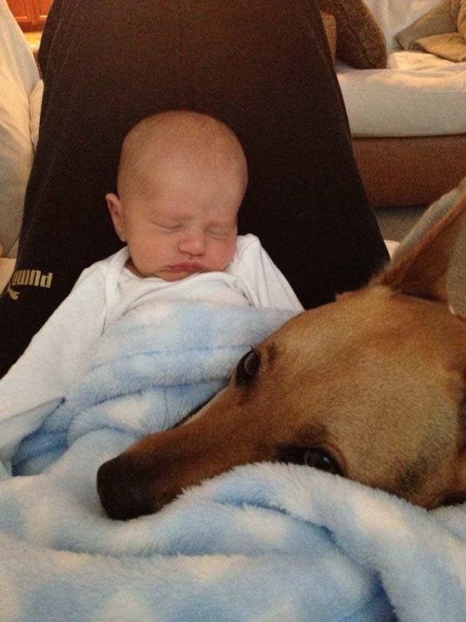 Ένα μωρό και ο τετράποδος κολλητός του (5)