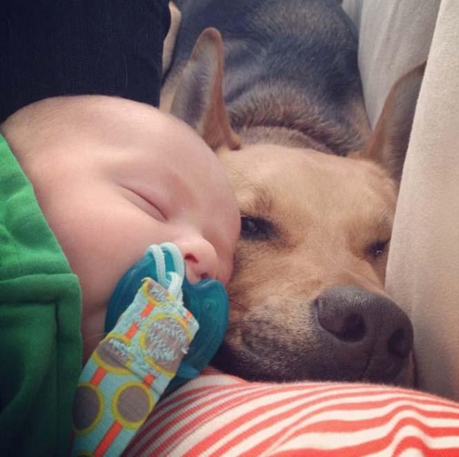 Ένα μωρό και ο τετράποδος κολλητός του (1)