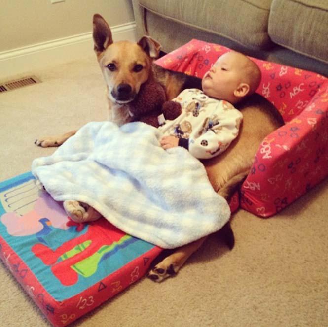 Ένα μωρό και ο τετράποδος κολλητός του (7)