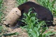Έσωσε τη ζωή μαύρης αρκούδας με μια τεράστια δαγκάνα