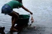 Έτσι ψαρεύουν Πιράνχας στη Βραζιλία