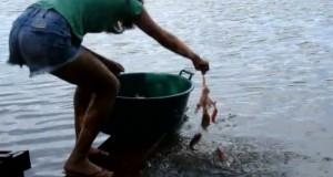 Έτσι ψαρεύουν Πιράνχας στη Βραζιλία (Video)
