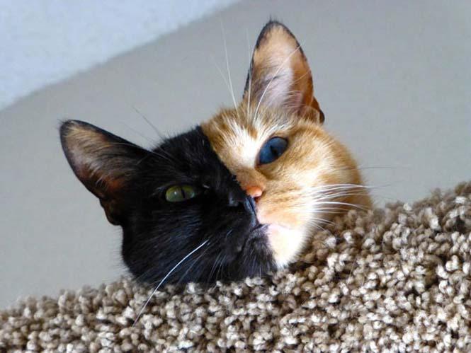Η γάτα με την πιο μοναδική εμφάνιση στον κόσμο (10)