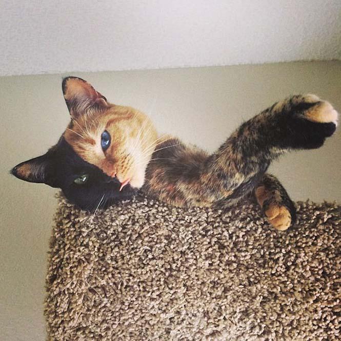 Η γάτα με την πιο μοναδική εμφάνιση στον κόσμο (14)