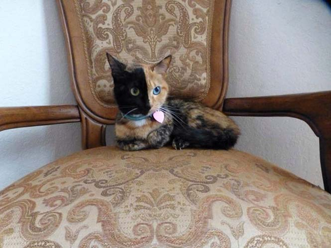 Η γάτα με την πιο μοναδική εμφάνιση στον κόσμο (15)