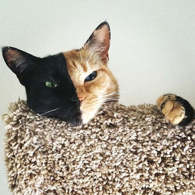 Η γάτα με την πιο μοναδική εμφάνιση στον κόσμο (18)