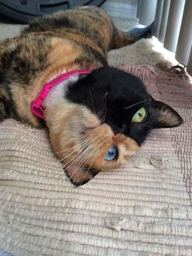 Η γάτα με την πιο μοναδική εμφάνιση στον κόσμο (19)