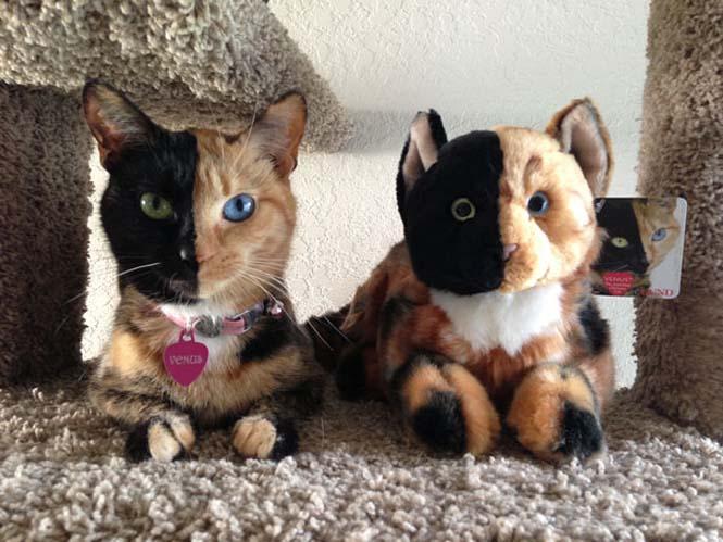 Η γάτα με την πιο μοναδική εμφάνιση στον κόσμο (24)