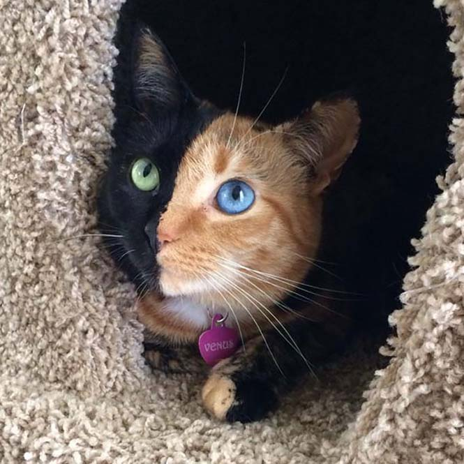 Η γάτα με την πιο μοναδική εμφάνιση στον κόσμο (25)