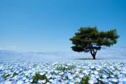Hitashi Seaside Park (1)