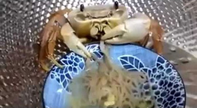Καβούρι τρώει Noodles