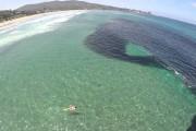 Κολυμπώντας μέσα σε ένα τεράστιο κοπάδι από αντζούγιες