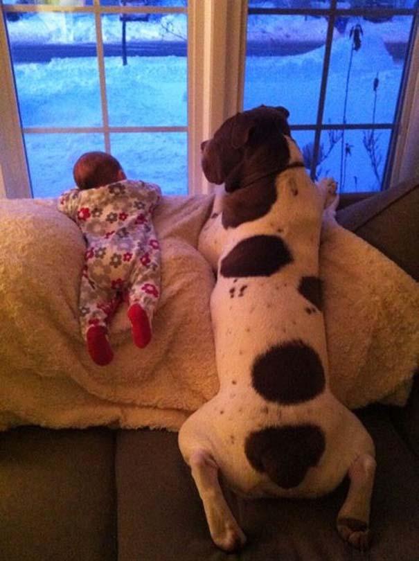 Μωρά με τον μεγάλο σκύλο τους (2)
