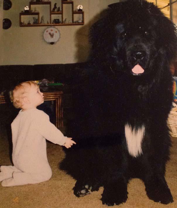 Μωρά με τον μεγάλο σκύλο τους (4)